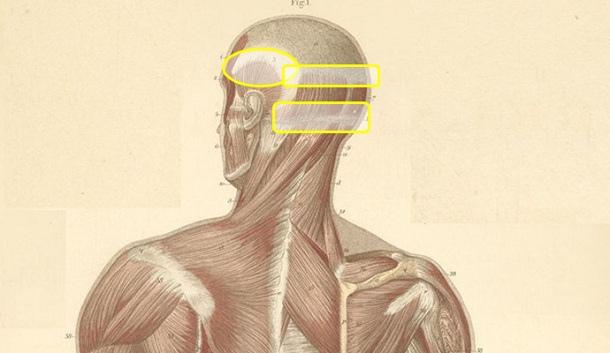 頭頸部肌肉