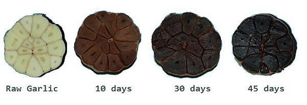 black garlic 白蒜發酵熟成黑蒜的過程