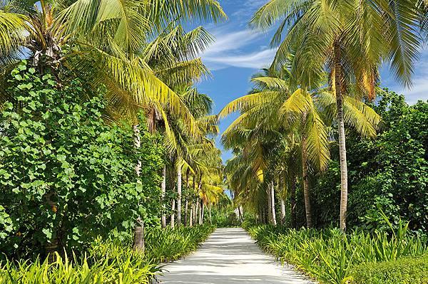 Ayada_Maldives240.jpg