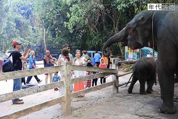 大象餵食02.jpg