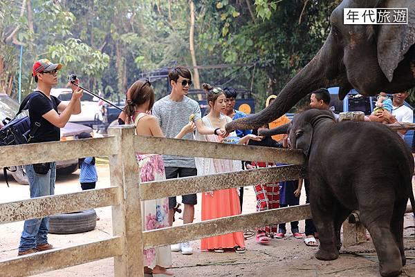 大象餵食01.jpg