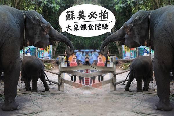 大象餵食04.jpg