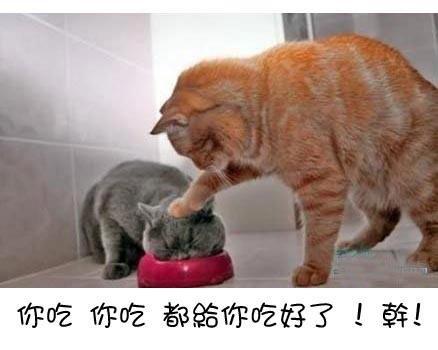你吃你吃都給你吃好了!幹