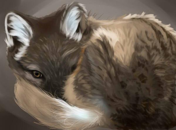 狐2.jpg