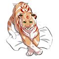 tiger狐狐.png
