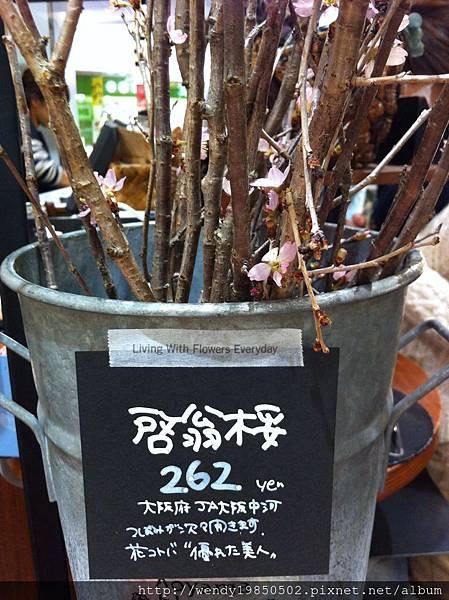 難波花店 (18)