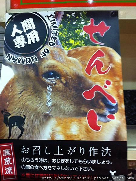 奈良公園 東大寺 (33)
