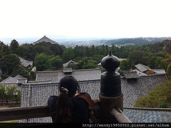奈良公園 東大寺 (43)
