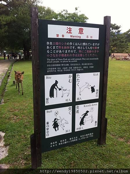 奈良公園 東大寺 (64)