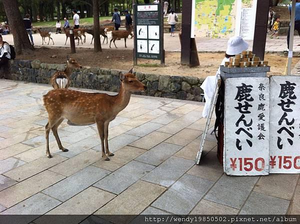奈良公園 東大寺 (65)