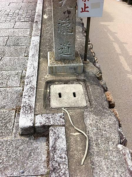 箕面滝 (28).jpg