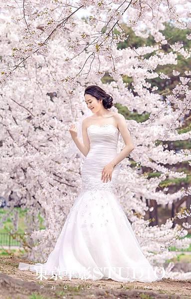 北海道櫻花.jpg
