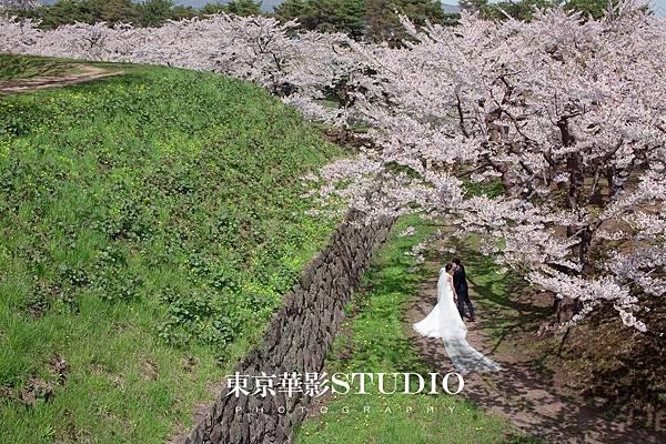 北海道櫻花5.jpg