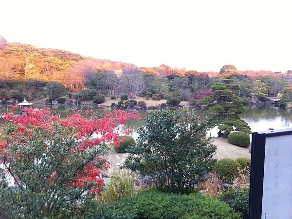 万博記念公園 (15).jpg