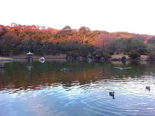 万博記念公園 (18).jpg