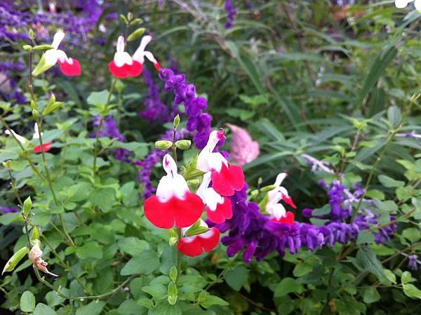 英国風ナチュラル庭園 (2).jpg