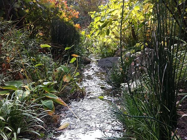 英国風ナチュラル庭園 (6).jpg
