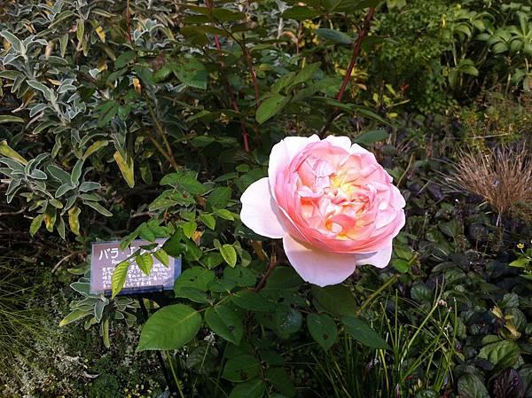 英国風ナチュラル庭園 (19).jpg