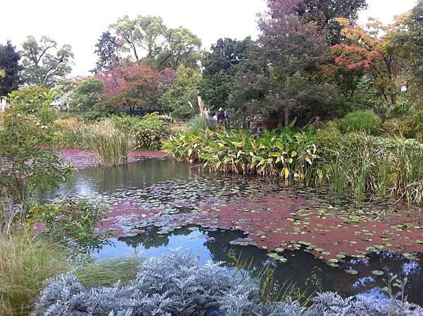 水辺の植物・水生植物エリアと欧風庭園 (3).jpg
