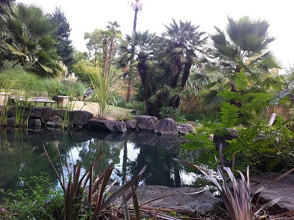 水辺の植物・水生植物エリアと欧風庭園 (1).jpg