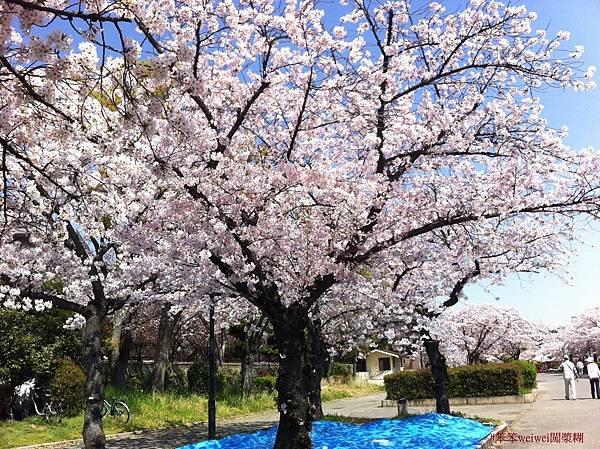 毛馬桜ノ宮公園 (7).jpg