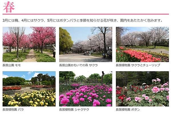 長居公園春.JPG