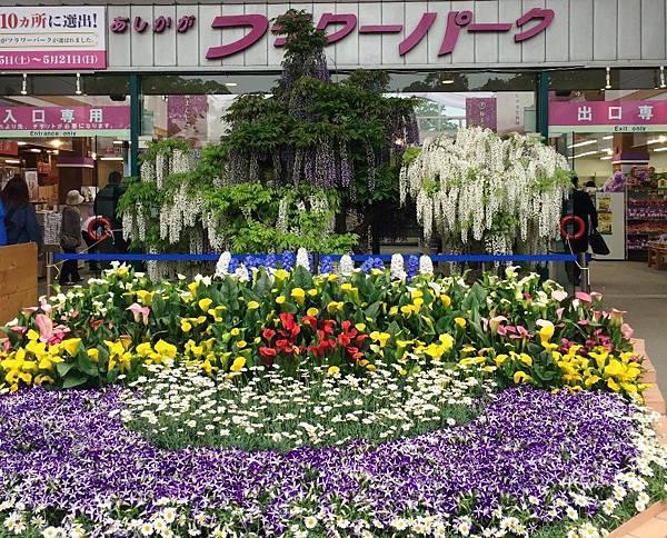 足利紫藤園 (2).JPG