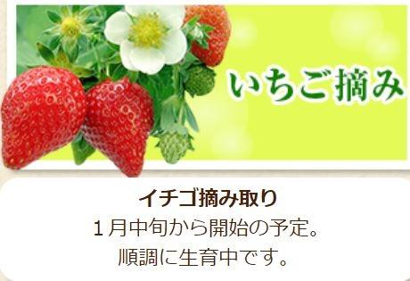 農業庭園たわわ草莓.JPG