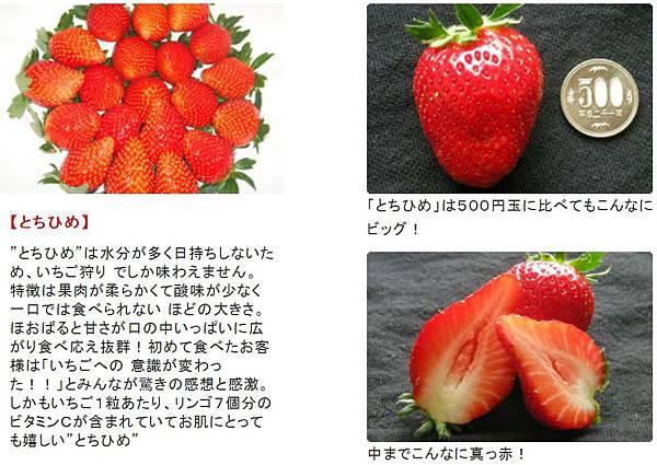 観光農園アグリの郷 とちひめ.JPG