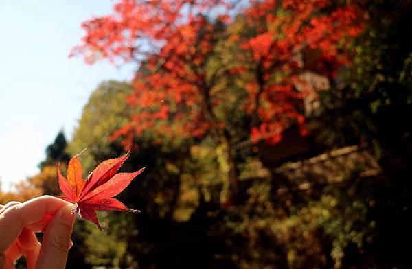 kyoto2-26.jpg
