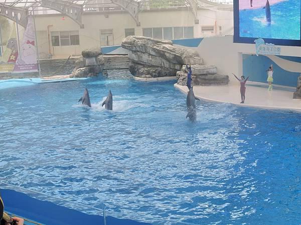 2015花蓮員工旅遊-海洋公園8