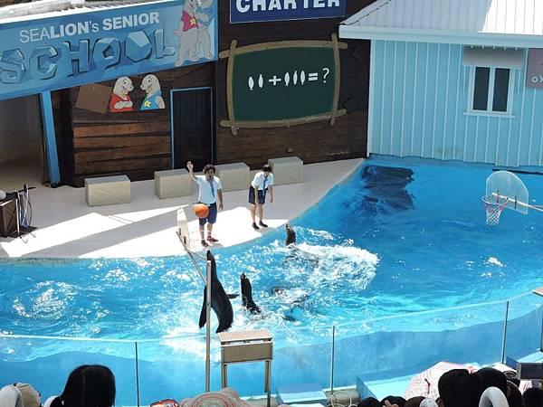 2015花蓮員工旅遊-海洋公園2