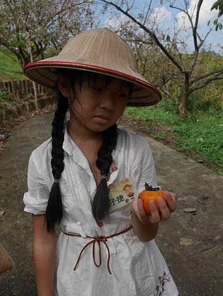小小柿農10