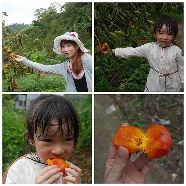 小小柿農15