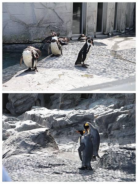 北海道day2-旭川動物園16