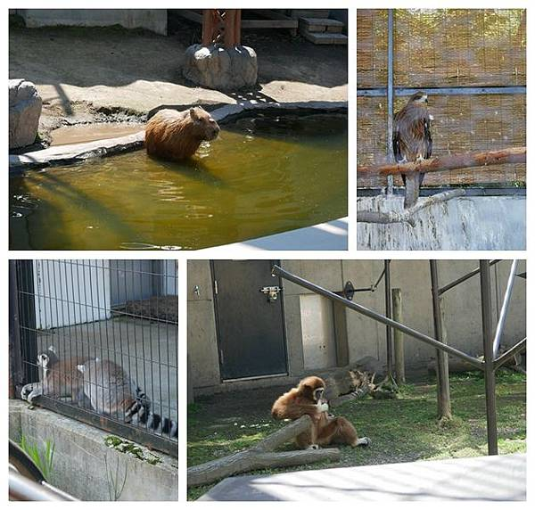 北海道day2-旭川動物園7
