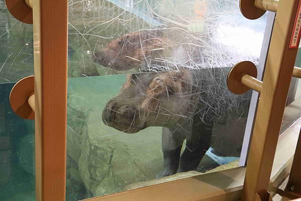 北海道day2-旭川動物園26