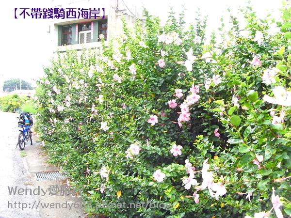 20090806梧棲到芳苑鄉11.jpg