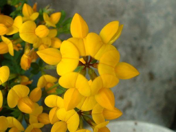 061花之禮文島