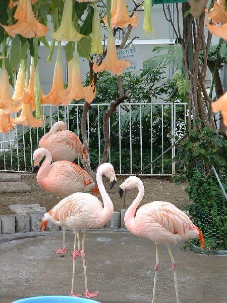 084函館-熱帶植物園.jpg