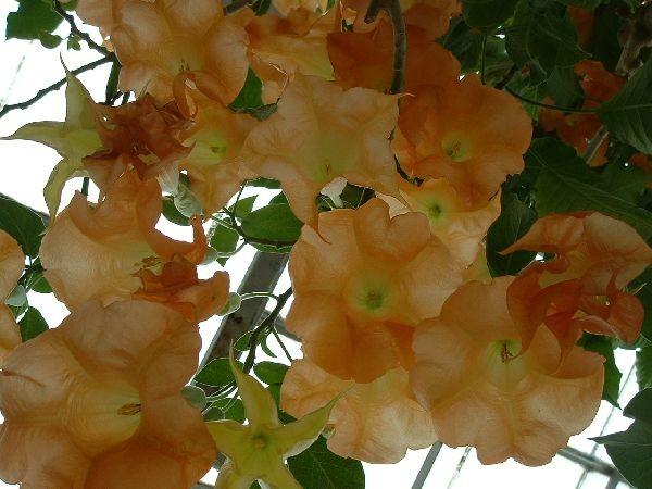 085函館-熱帶植物園