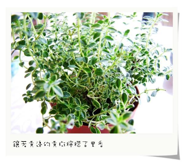 DSCF5292.jpg
