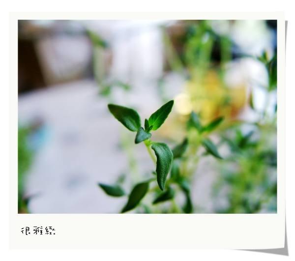 DSCF5295.jpg