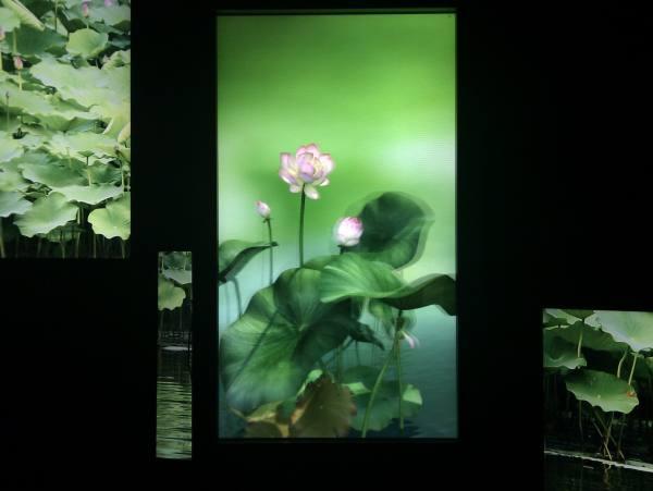 C360_2011-01-27 18-31-43.jpg