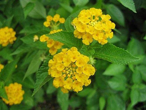 flower-a2.jpg