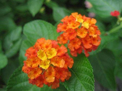 flower-a3.jpg