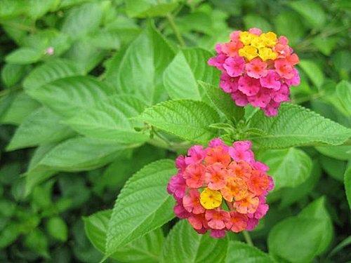 flower-a5.jpg