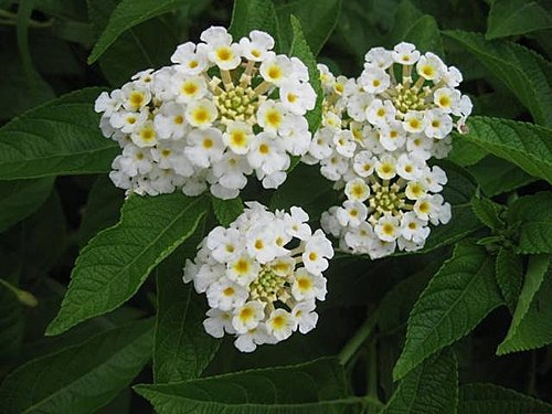 flower-a4.jpg