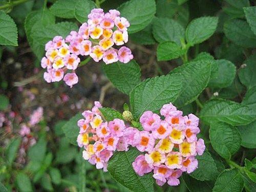 flower-a6.jpg