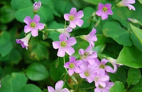 flower-c1.jpg